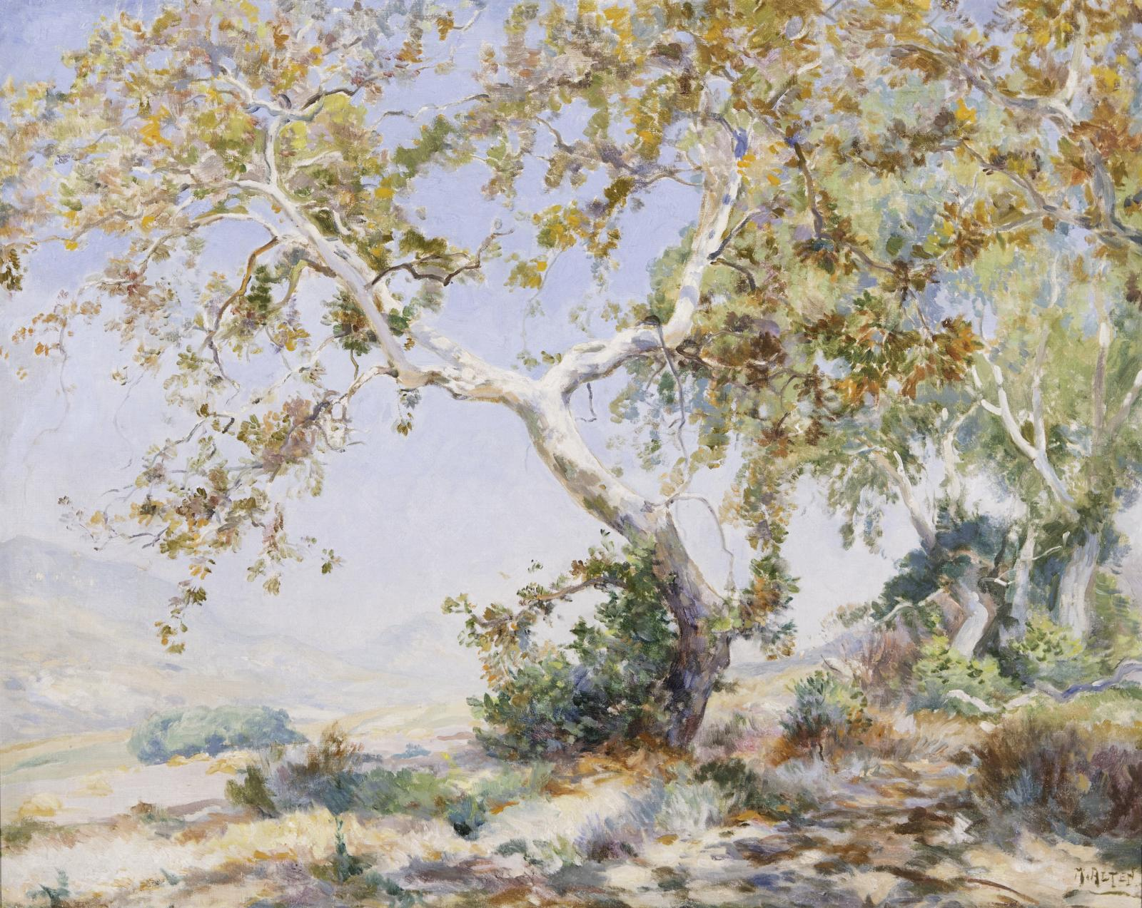 Landscape scene with a Sycamore tree with brown leaves is in the center.