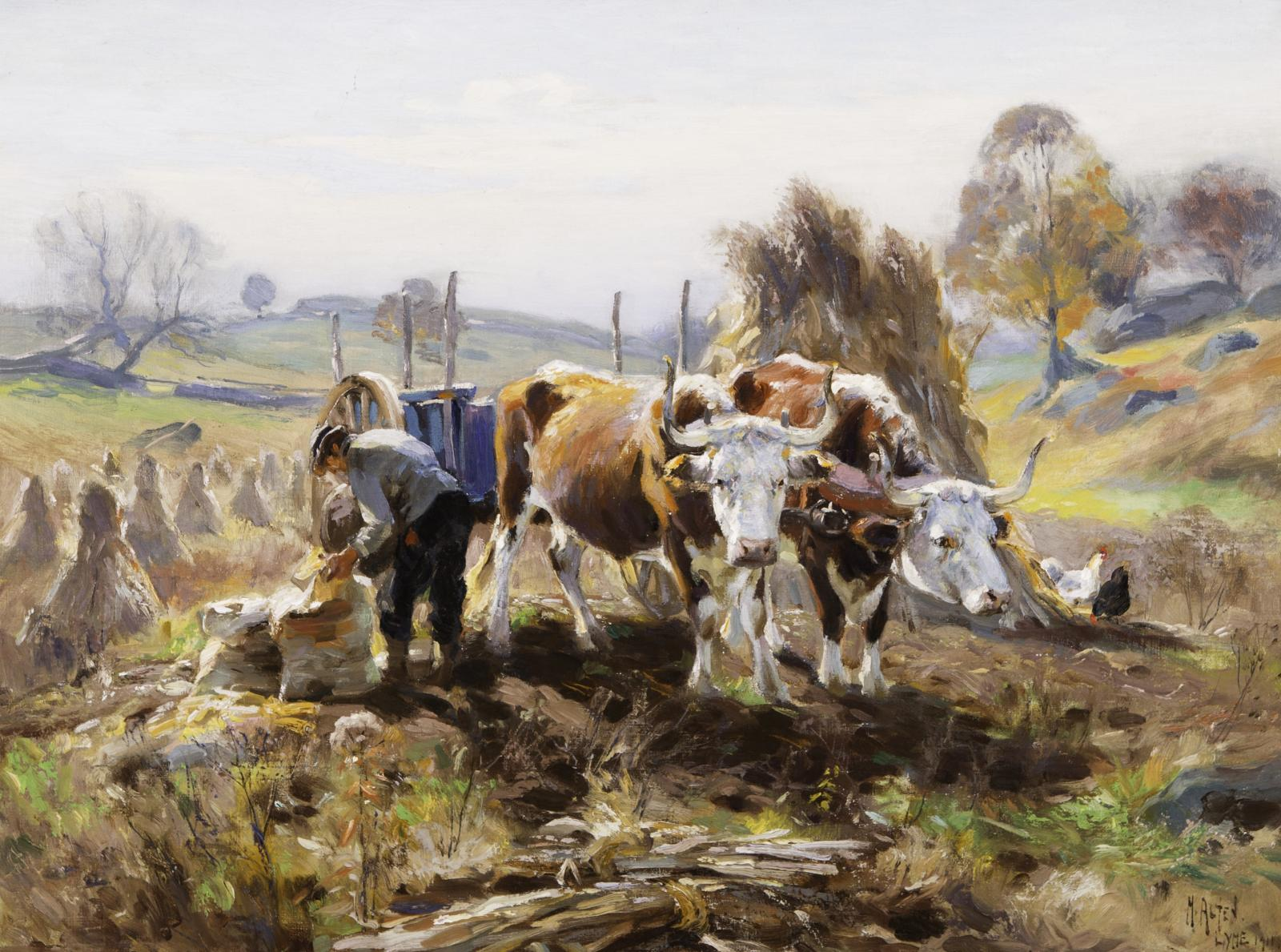 Farmer with two oxen is putting something in a bag on the ground.