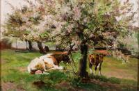 One cow lying down and a calf standing under a tree blooming with pink flowers.